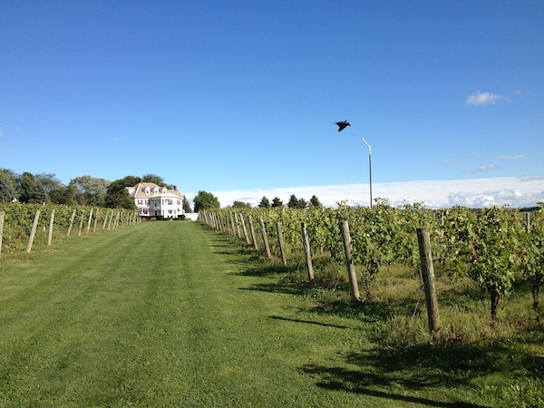 Ventosa Vineyards